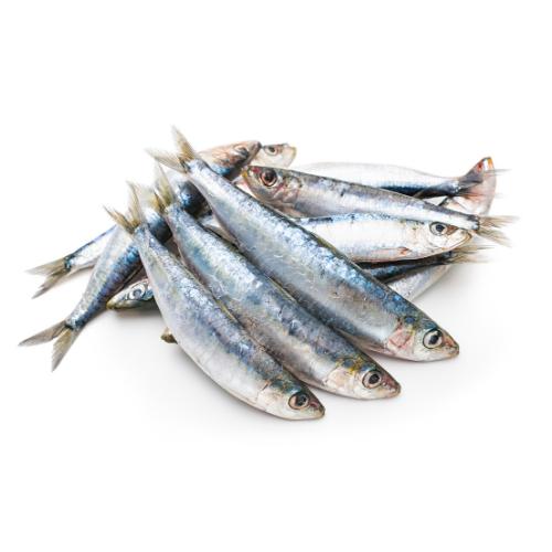 animazoo_sardine