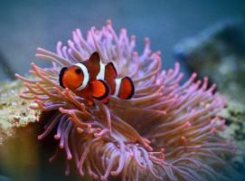 animazoo_services-pour-aquarium